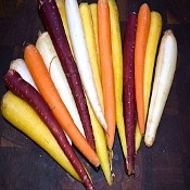 Carrots Rainbow organic (2lb Bag)