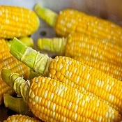 Corn Organic Bicolored, Non-GMO, per ear