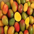 Mango, Organic Tommy Atkins, individually priced